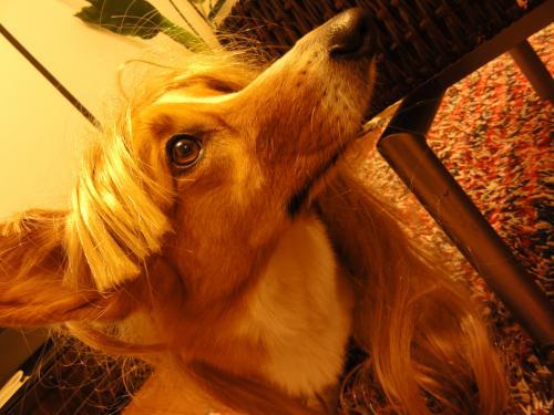 金髪ウリ1