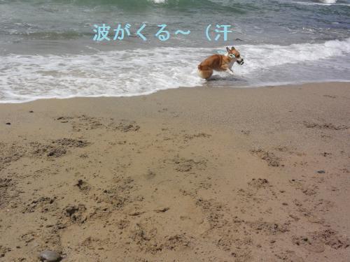 波がきた~