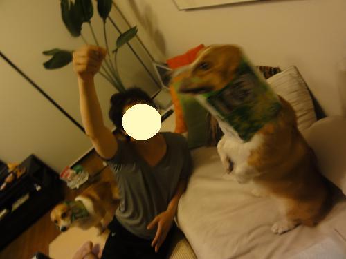ビール犬4