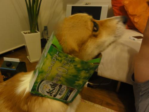 ビール犬3
