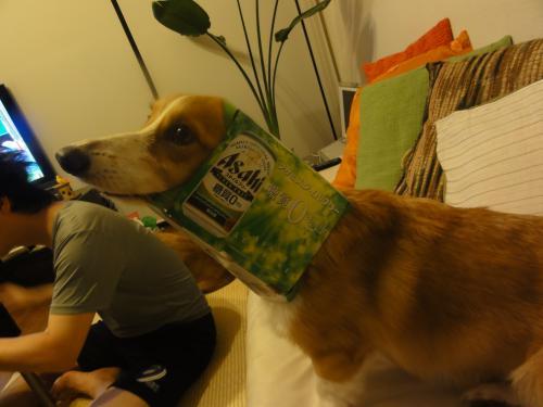 ビール犬2