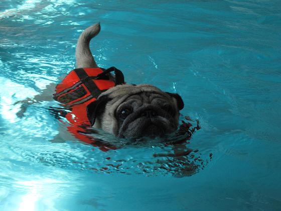 泳いでいるチッチは、本当にかわええっす。