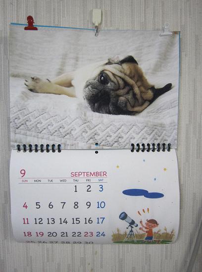 チッチ君カレンダー、9月になりました。
