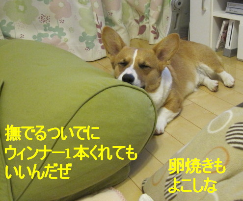 IMG_2541.jpg