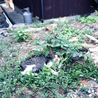 20110814_Okikamuro_Rolleiflex28F_Ektar__2.jpg