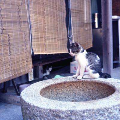 20110814_Okikamuro_Rolleiflex28F_Ektar_.jpg