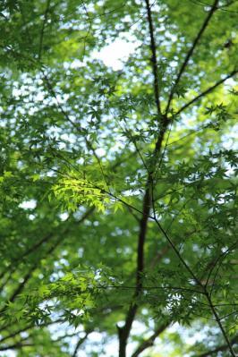 2011_0515MItakiTemple0001.jpg