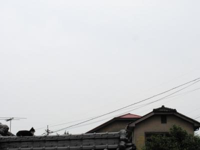 2011_0605Cats0002.jpg
