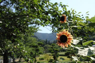 2011_07_17_KikkoPark0002.jpg