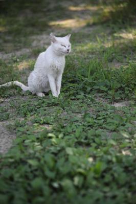 2011_07_17_KikkoPark0017.jpg