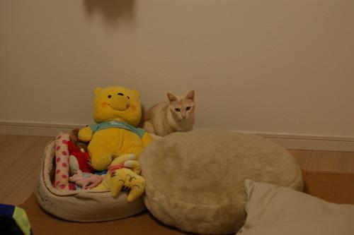 あみのベッド