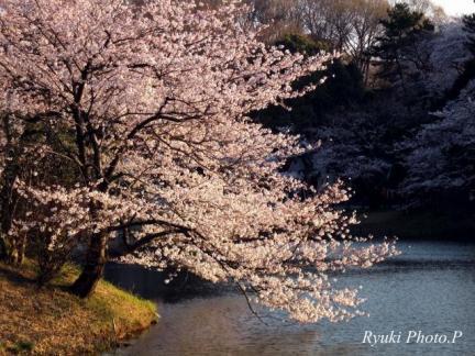 s 桜三つ池 横