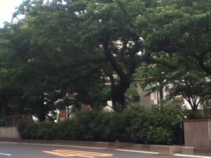 S 20120602茗荷谷小石川植物園への通り