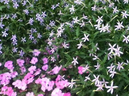 S 20100711 青山 花壇