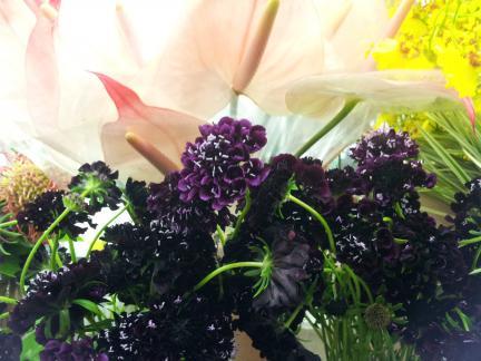s20121109 ローゼンの素晴らしい花