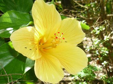 D沖縄旅行 2010-08-25 14-39-58