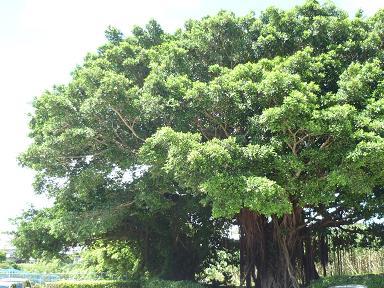 D沖縄旅行 2010-08-25 14-43-25