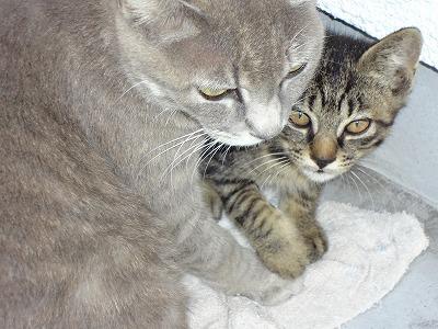 ママとまーくん