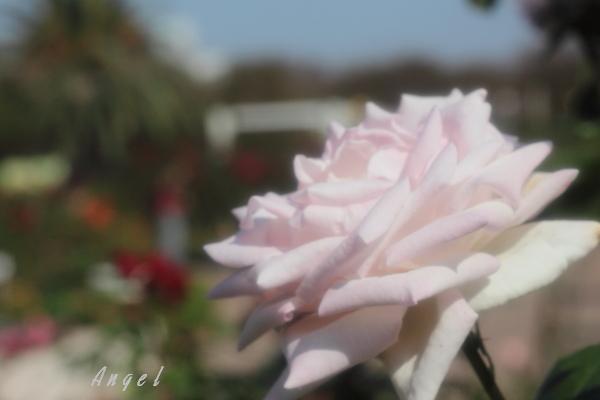 メガミ(65)