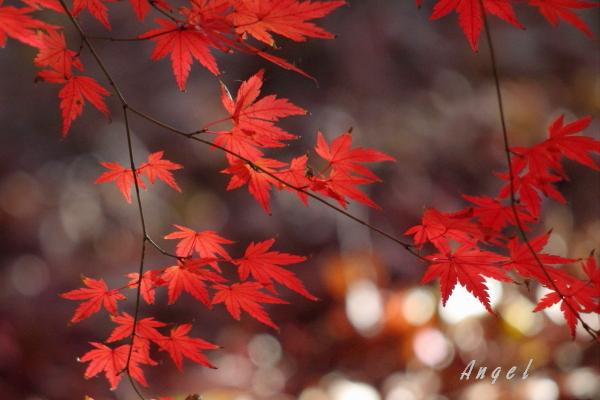 紅葉(50011)