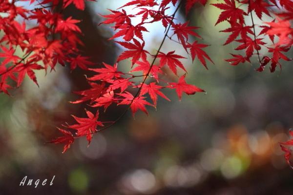 紅葉(50012)
