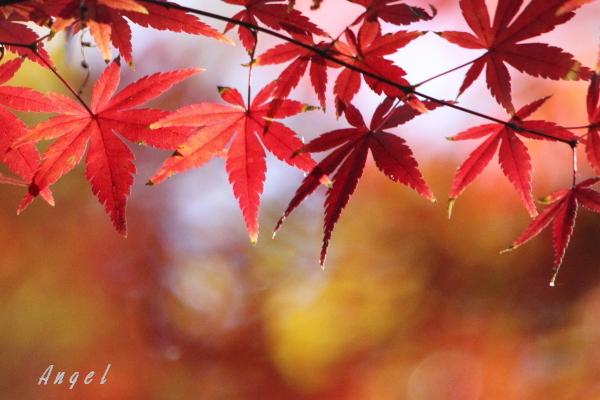 紅葉(50086)