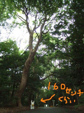 DSCF5159_convert_20120918173335.jpg