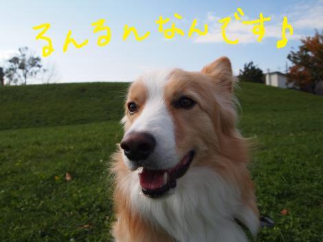 PA257470_convert_20121108132109.jpg