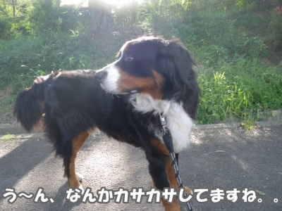 RIMG1369.jpg