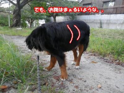 RIMG1775.jpg