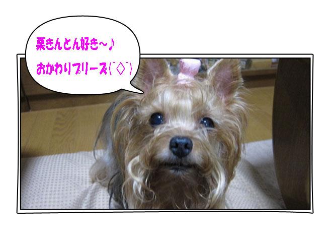 IMG_0941a.jpg