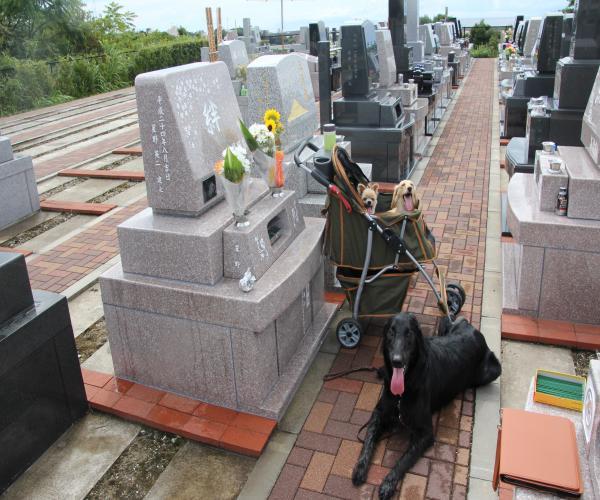 01Sep お墓詣り1