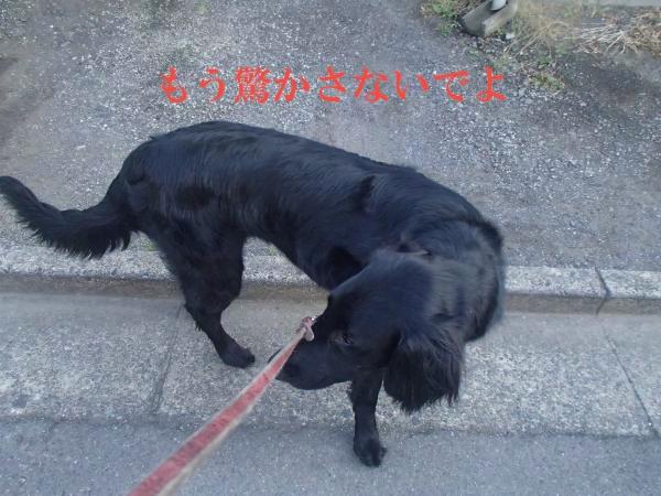 P6070016_convert_20120607183802.jpg