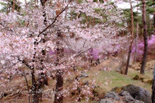 鳴沢村201102