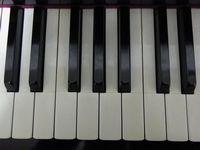 教室のピアノの鍵盤は象牙