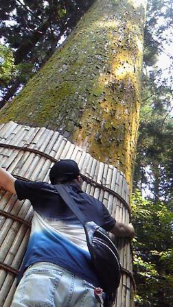20100802巨木