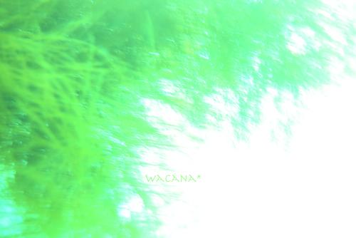 海の風-2 のコピー