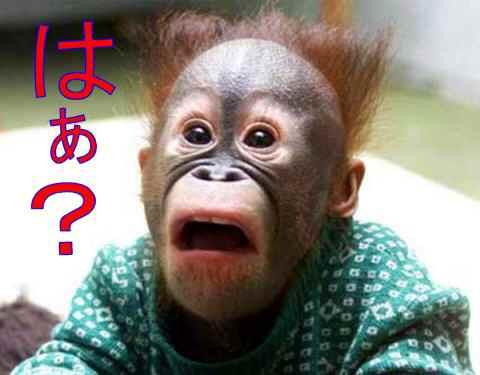 チンパンジー子供