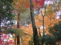 2013.11.22三重・滋賀5