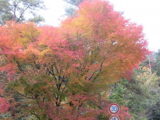 2013.11.22三重・滋賀8