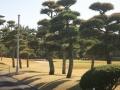 2013.11.27神奈川・東京1