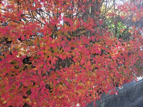 2013.11.28神奈川5
