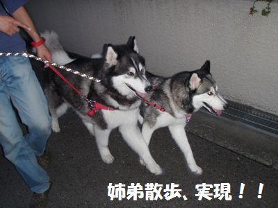 2010-6-19himawari-1.jpg