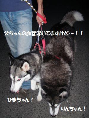 2010-6-19himawari-2.jpg