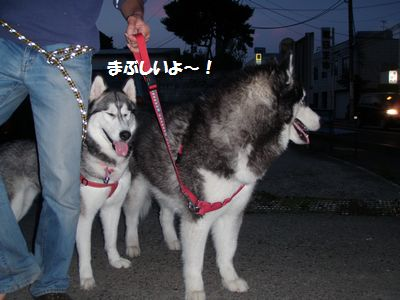 2010-6-19himawari-3.jpg