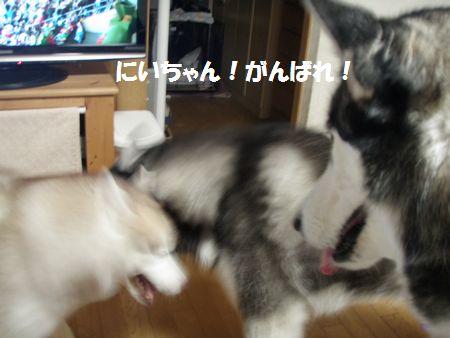 2010-6-21hima-1.jpg