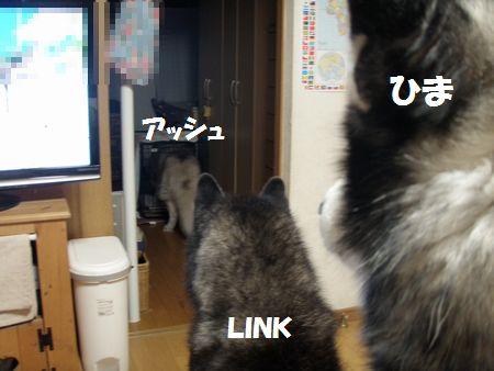 2010-6-21hima-2.jpg