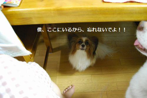 2010-8-8blog3.jpg