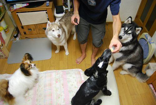 2010-8-8blog4.jpg