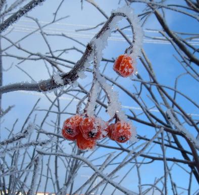H23樹氷ブログ5